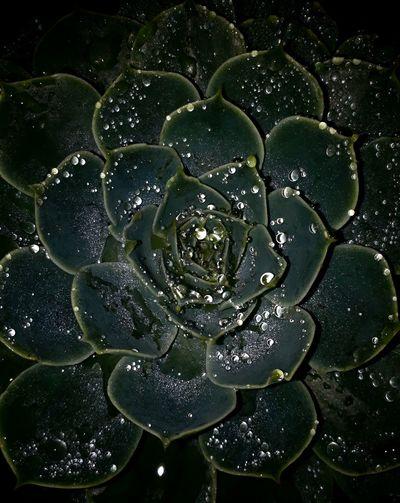 lluvia nocturna