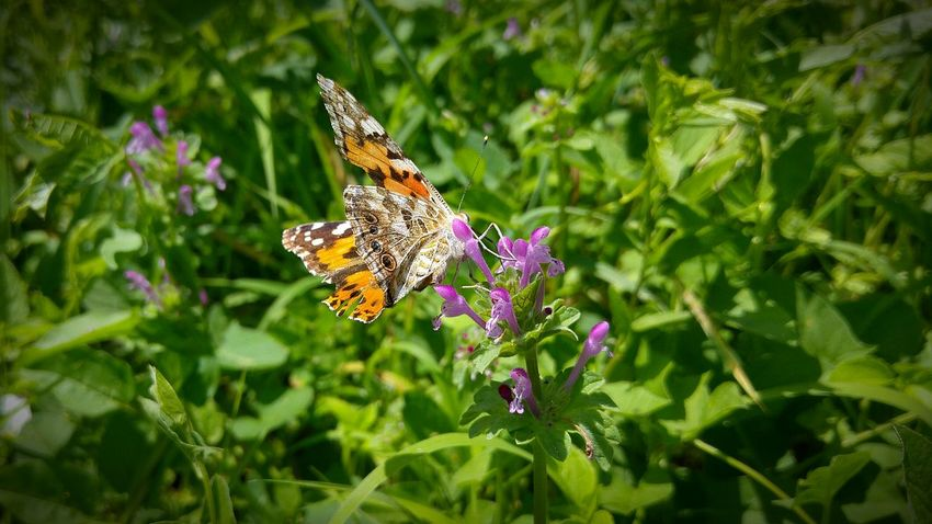 Facebook.com/photobyrich Photo By Rich Amazing Butterfly Pillango Taking Photos Enjoying Life Garden Photography Relaxing Pure Flower