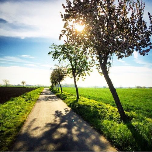 Nature Sunlight The Way Forward Grass Beauty In Nature Tree Sky Idyllic Tranquil Scene Landscape Scenics Green Color Growth Non-urban Scene Outdoors Field Sunbeam No People Day