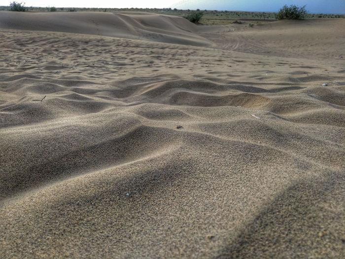 Sand Dune Beach Desert Sand Tire Track Backgrounds Arid Climate Sea Track - Imprint Water Wave Pattern Arid Landscape Barren Extreme Terrain Eroded Shore Arid Rugged Paw Print FootPrint Animal Track Marram Grass