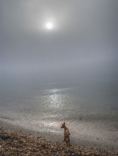 View of whippet on beach against sky