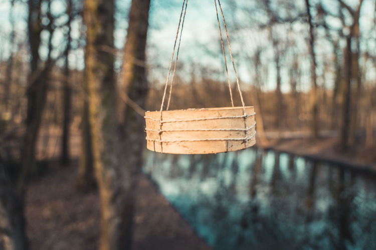 Wooden bowl with birdseeds hanging from a tree, with public park in background Tree Focus On Foreground Hanging Tree Trunk Nature Trunk Wood - Material Day Forest Plant No People Close-up Land Tranquility Outdoors Rope WoodLand Selective Focus Branch Tied Up Bark