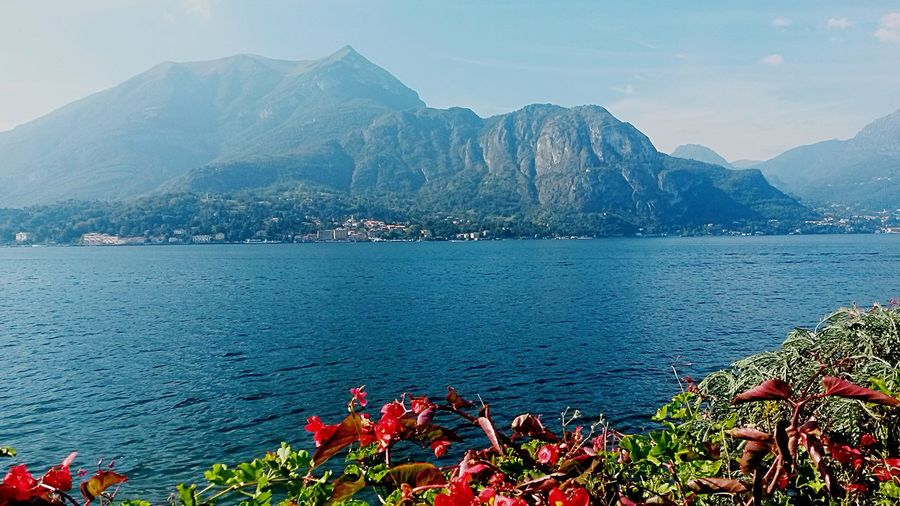 Lake Como Italy Lake View Lake Como Water Hill Water Flower Foreground