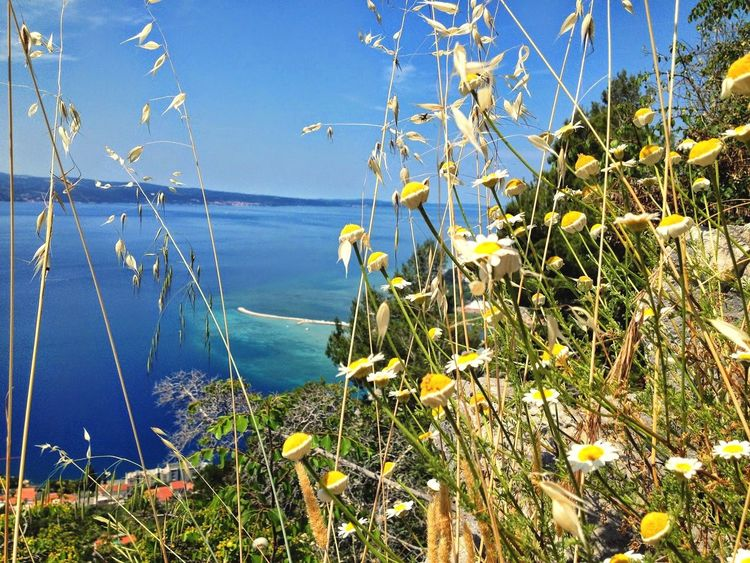 Water Flower Plant Nature Sea Growth Blue Uncultivated Outdoors Beauty In Nature Tranquility No People Day Scenics Grass Summer Travel Destinations Sky Tree Clear Sky Croatia Omis Croatia Travel Beach Explore Perspectives On Nature