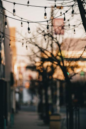 Lights hanging on city sidewalk.