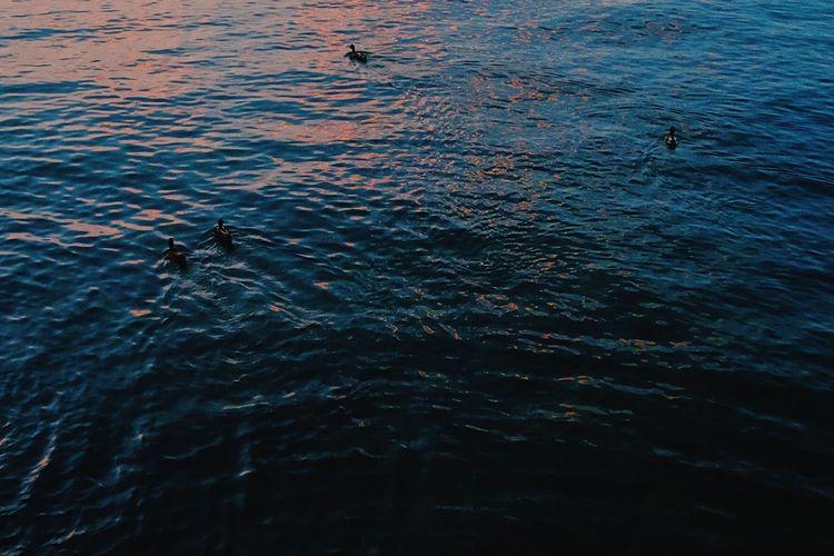 Ducks on a lake at dusk. Ducks Dusk Evening Lake Lake View Light No People Pink Hue Reflections Ripples Water Water Bird Water Scene