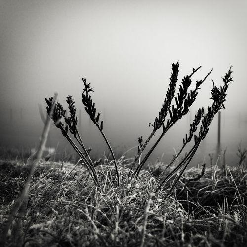 fog passing
