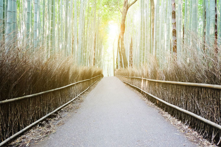 Walkway Amidst Bamboos In Forest