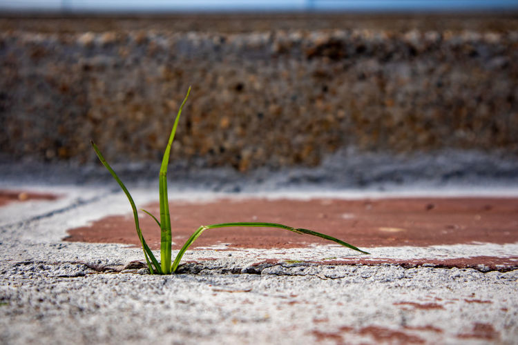Stem grass growing from cracking cement Cemetery Grass Growing Growth Hard Hope Life Attempt Crack Cracking Environmental Conservation Posibility Possible Stem Survival Toughness Weed