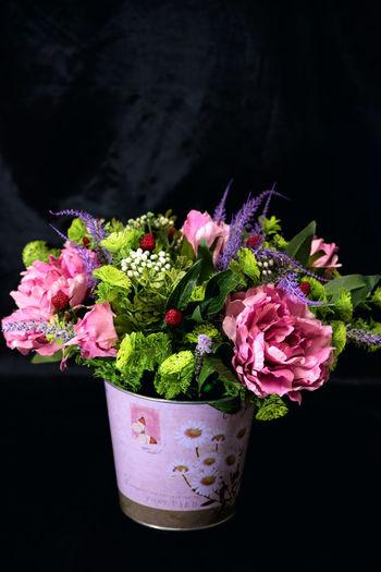 Close-up of pink flower pot against black background