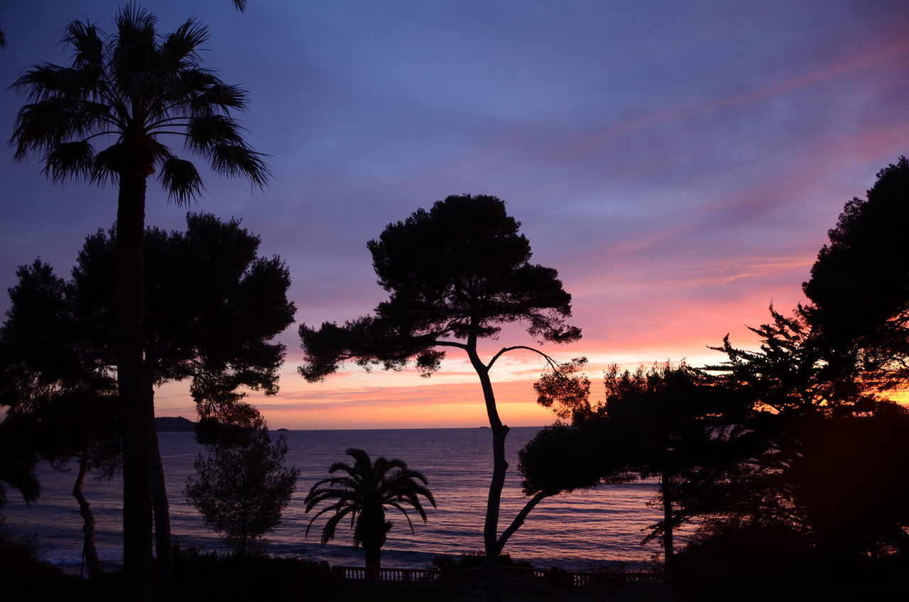 Silhouette Trees On Beach At Sunset