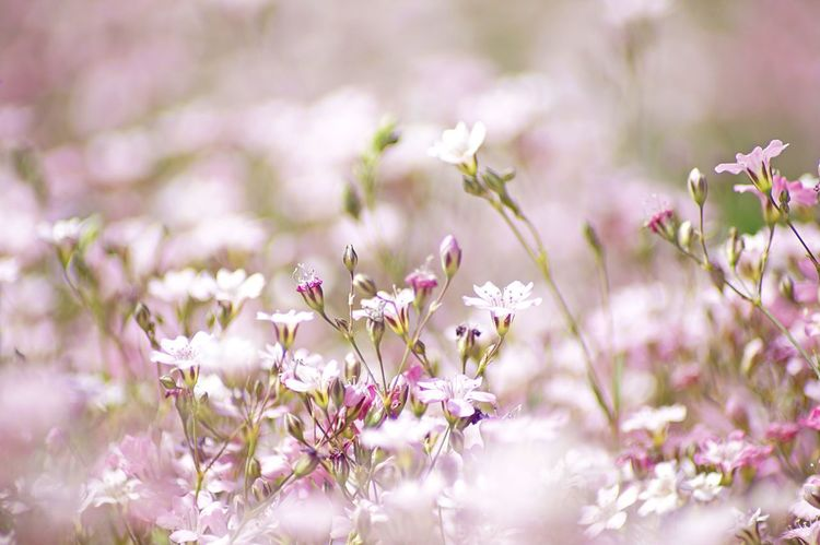 beautiful flower field with bokeh Background Beautiful Bokeh Calmness Dreamy Flower Flowerfield Flowerporn Flowers Love Nature Pattern Pink Postcard Picture Soft Softness Spring Summer