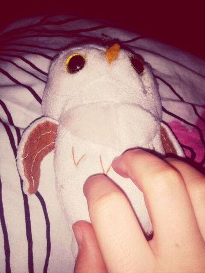 Holding My Cute Owl