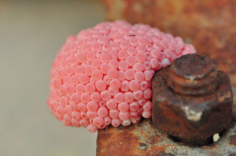 Close-Up Of Pink Eggshells By Rusty Nut On Railing