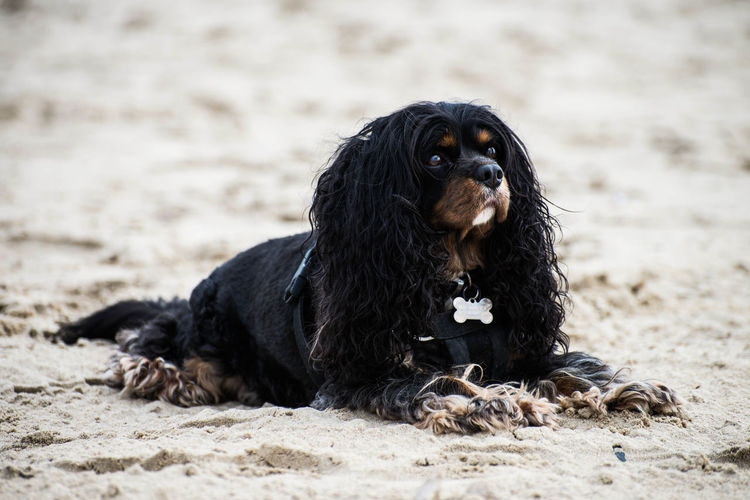 A beautiful canine takes in the sun on a sandy beach Dogs Domestic Pets Animal Animal Themes Beach Canine Dog Domestic Animals Nature Pet Sand