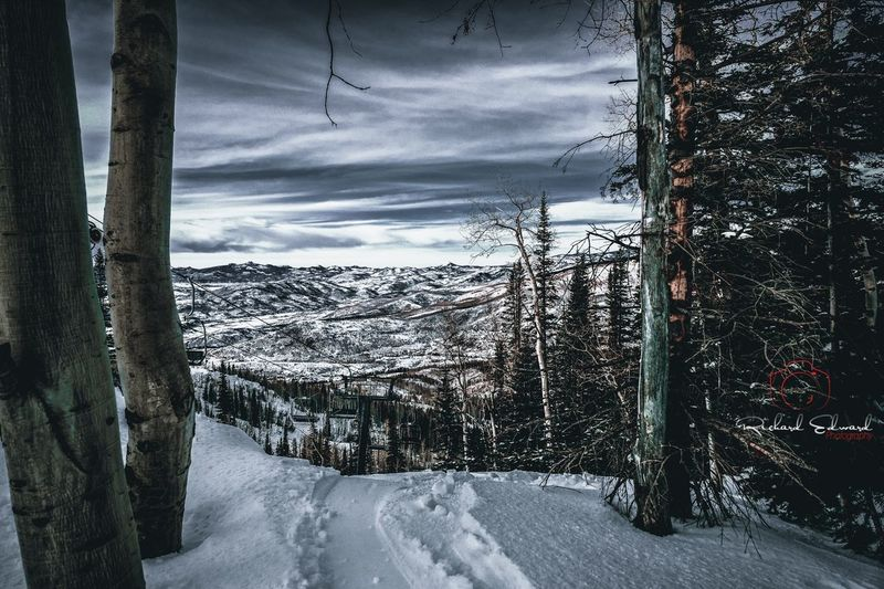 """""""Rest On High"""" Sky Cloud - Sky Nature No People Tree Plant Day Outdoors Scenics - Nature Beauty In Nature Winter Snow"""