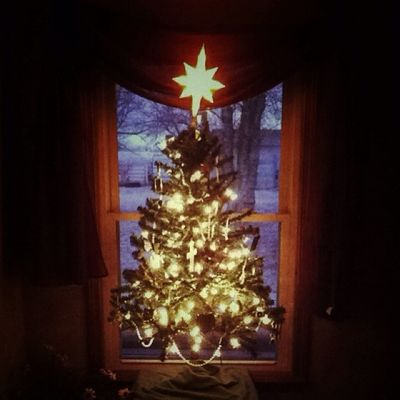 Christmas (Jesus) Tree during Sunrise . My favorite time to contemplate.