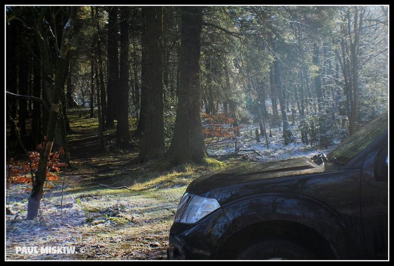 Nissan Navara Forest And Sunbeams Snow Forest Roddlesworth Forest.