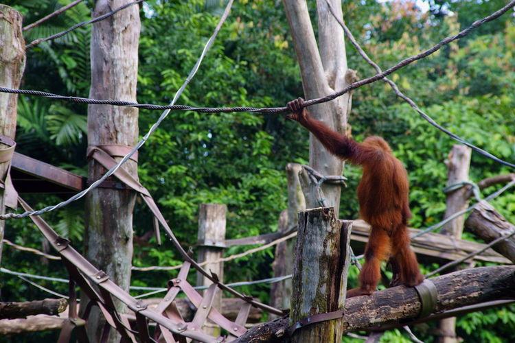 @ Singapore zoo