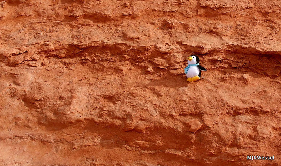 A meeting in the moroccan sun Sand Arid Climate One Person Peguin Cuddly Toy Sand Pinguin Stofftier In The Middle Of Nowhere In The Wild Sunlight Brown Nature
