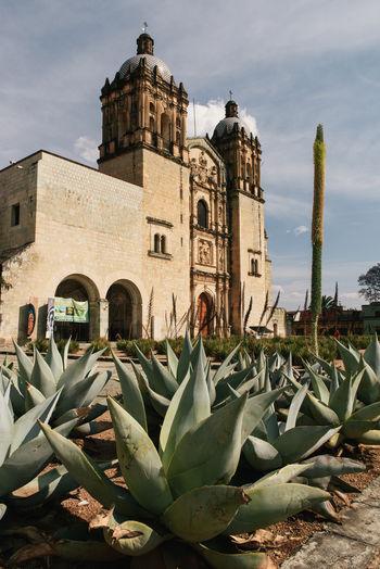 Succulent plants by building against sky