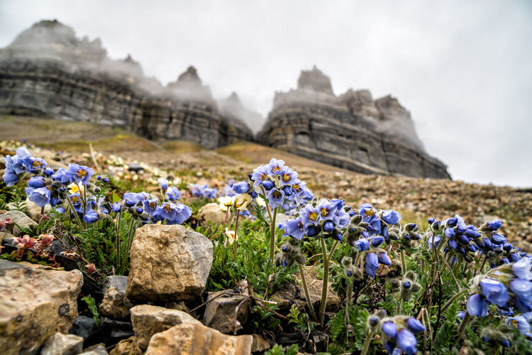 Purple Flowering Plants By Rocks On Field Against Sky
