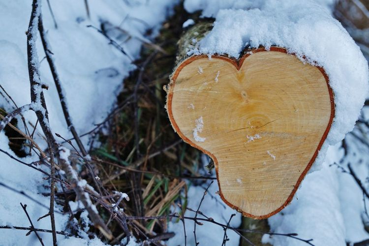 Cold Temperature Heart Shape Nature Outdoors Snow Tree Trunk Winter Wood - Material EyeEmNewHere Sony Alpha Sonya58 Bayern Germany Schwabenland