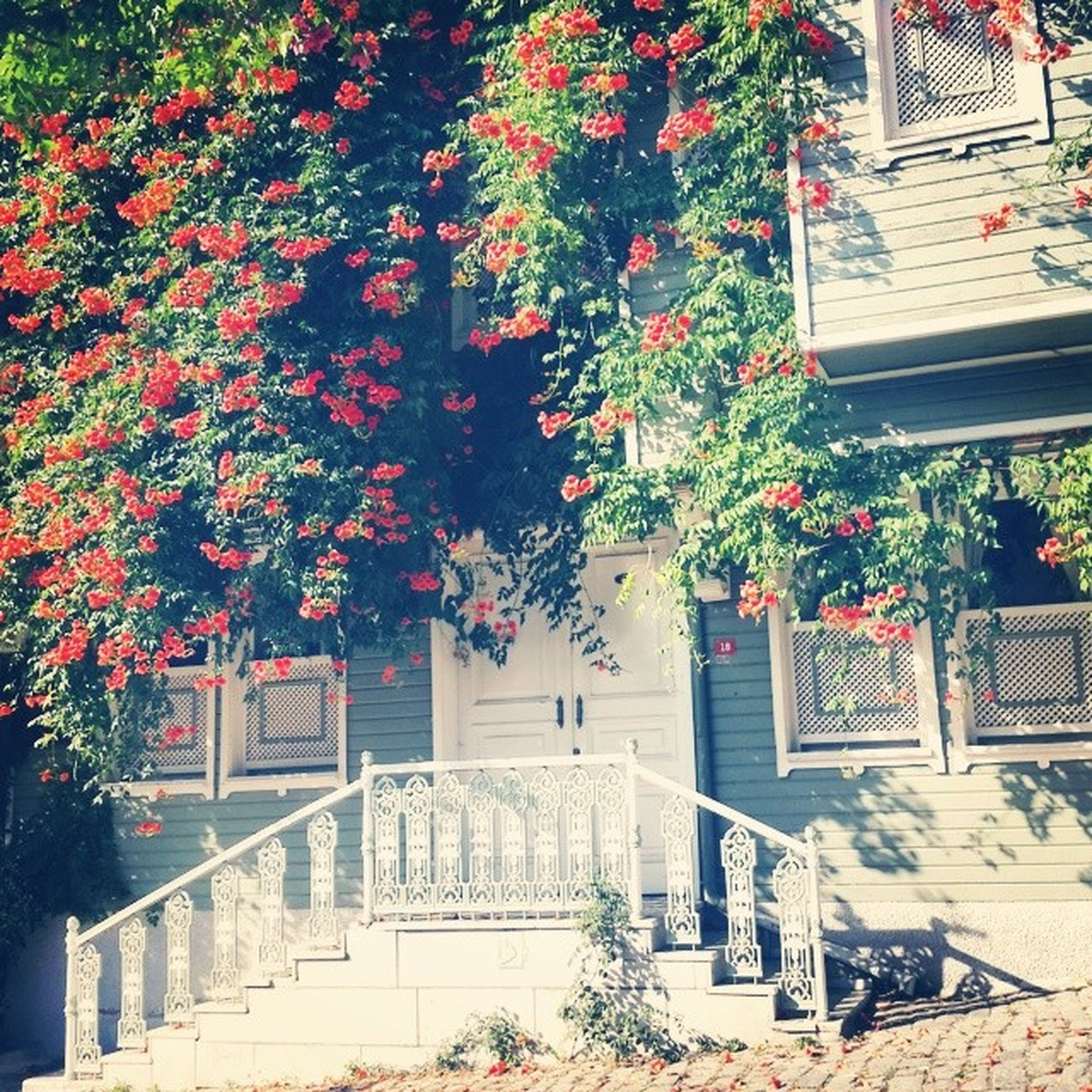 building exterior, built structure, architecture, tree, growth, flower, plant, house, branch, sunlight, nature, potted plant, day, outdoors, no people, park - man made space, residential building, residential structure, railing, entrance