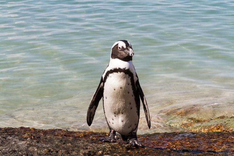 Penguin on shore