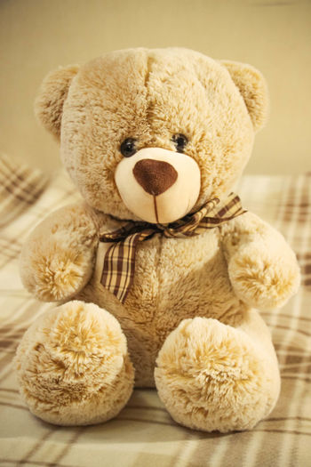 Teddy bear Bear Brown Collection No People Softness Still Life Sweet Bear Teddy Teddy Bear Toy Toy Photography Toyphotography