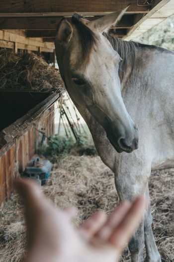 View of person hand with horse in farm