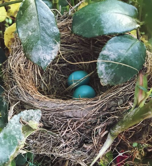 Animal Nest New