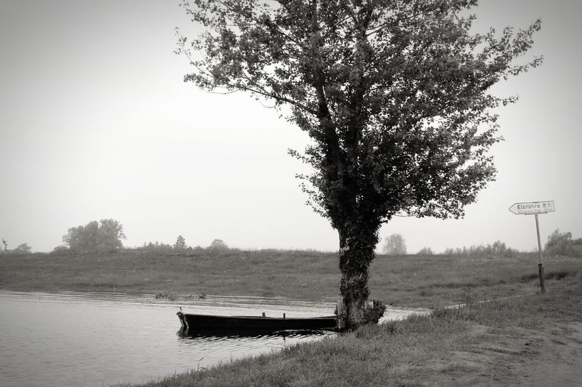 without Boat Elbe River Ferry Blackandwhite Melancholy Contrast Tree Nature Water Beauty In Nature Lake Scenics Tranquility Outdoors Growth Day No People Sky Branch