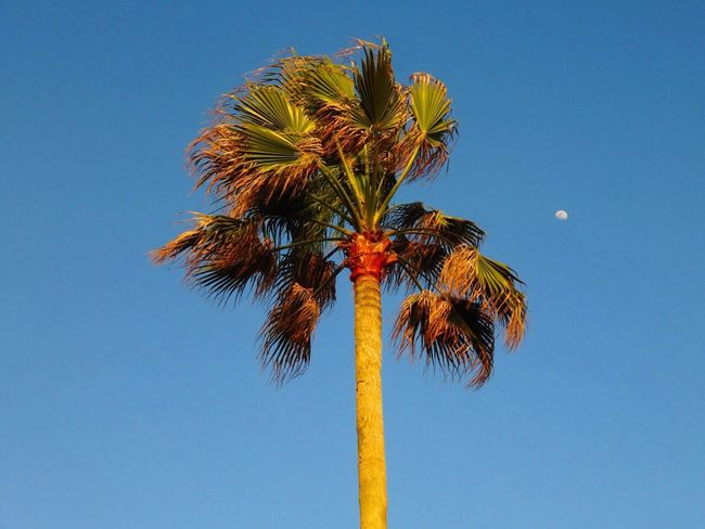 Hanging Out Taking Photos Hello World Enjoying Life Check This Out Hi! Relaxing Seaside Palmtree Palm Moon Sky Sky_collection Tree Tree_collection