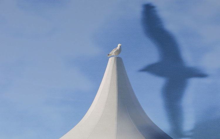 Möwe auf Zeltspitze Blau Blauer Himmel Klassik Im Juni Veranstaltung Heiligenhafen Möwe Möwe Im Flug Möwenschatten Seagull Shadow In The Flight Seemöwe