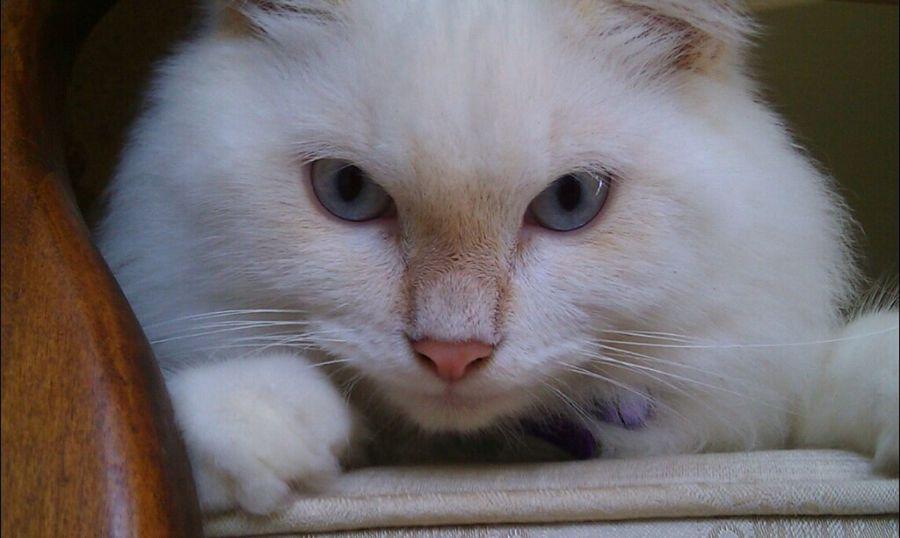 Cat Animals Cats Pets Fotodroiding Pets Corner