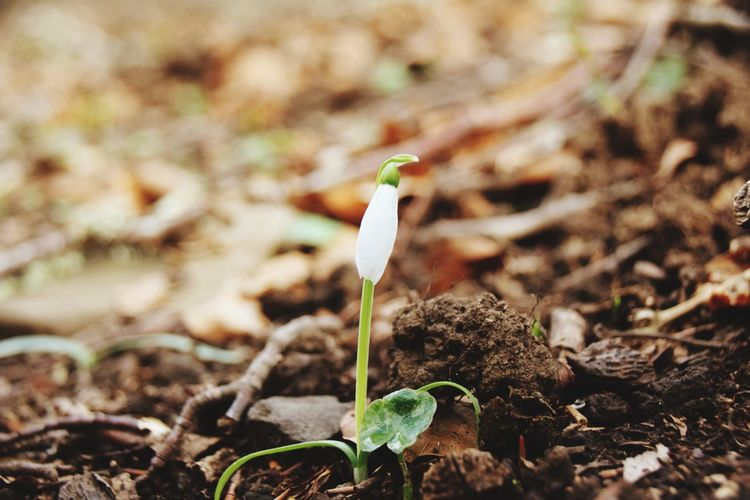 Close-up of white flower growing on field