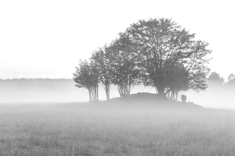 Black and White evening!! Blackandwhite Bw Visitfinland Thisisfinland Ourfinland Eyembestshots EyeEm Best Shots Nature Photography Eyemphotography Cow Grass Sky Foggy Atmospheric Mood Mist Hazy