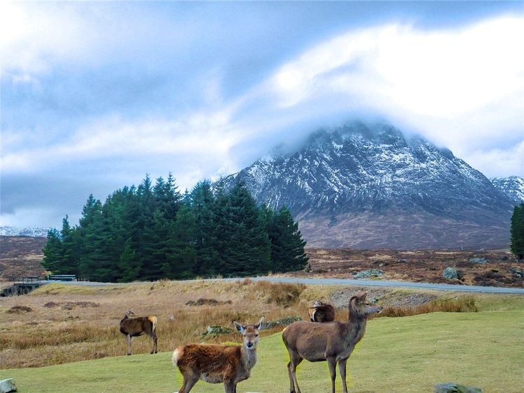 Beautiful Scottish landscape with deers Animal Themes Beauty In Nature Cloud - Sky Cold Temperature Day Deers Grazing Landscape Mammal Mountain Mountain Range Nature No People Outdoors Scenics Scotland Scottish Highlands Sky Snow Snowcapped Mountain The Great Outdoors - 2017 EyeEm Awards Tranquility Tree