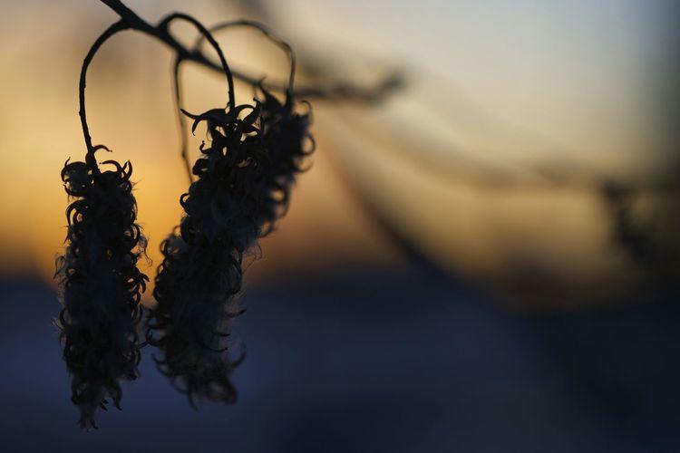 Peaceful sunset... Sunset_collection Canon 5dMarkⅡ Macro Closeup Amazing Amateurphotography