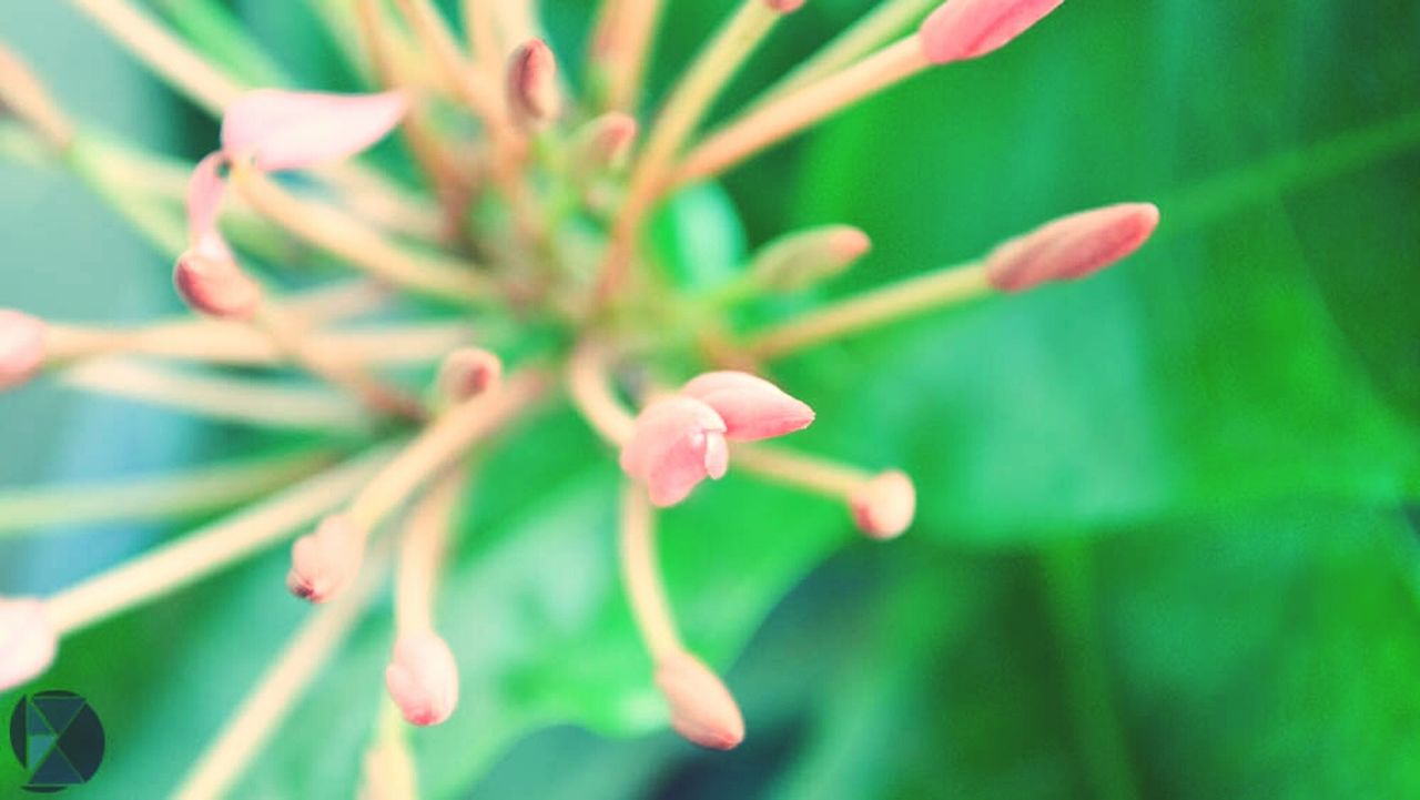 growth, plant, nature, flower, beauty in nature, green color, leaf, close-up, outdoors, fragility, tree, day, no people, freshness