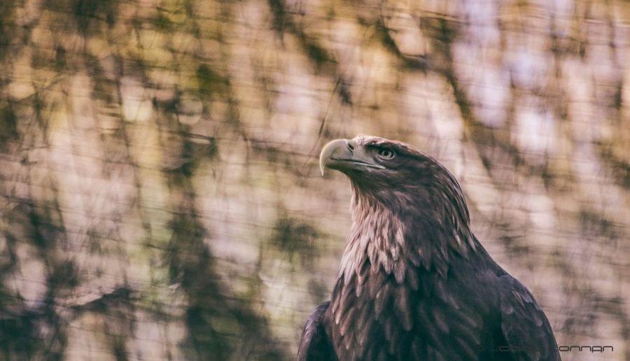 Eagle eye One