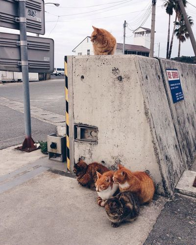 Animal Animal Themes Architecture Canine City Day Dog Domestic Domestic Animals Mammal No People One Animal Pets Relaxation Sitting Stray Animal Street Vertebrate