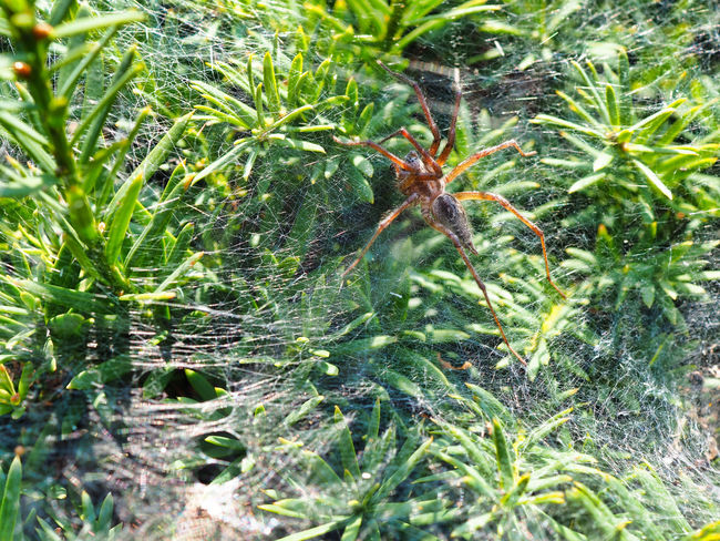 Jeans Brown Photography - Jeans Brown Photography Spider Animal Animal Themes Animal Wildlife Animals In The Wild Arachnid Arachnophobia Backgrounds Beauty In Nature Close-up Day Full Frame Green Color Growth Leaf Nature No People Outdoors Plant Plant Part Spider Spider Web Spiderweb