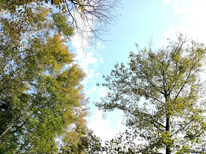 Autumn is gone, the winter is coming Sky Autumnbeauty Growth Tree Beauty In Nature