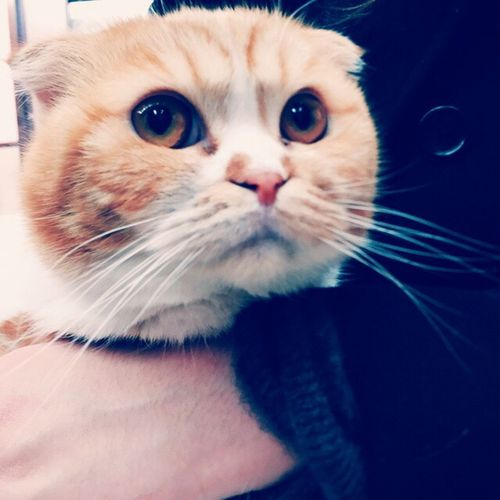 Isn't he adorable. Cat♡ First Eyeem Photo