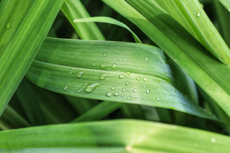 Close-up of raindrops on green leaves