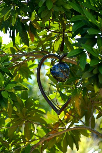copper heart among Allspice tree foliage Tree Hanging Growth Nature Green Color Beauty In Nature Outdoors Day No People Close-up Allspice Spice Foliage Summer Green Full Frame Backgrounds Pimenta Dioica Pimenta SunCatcher  Suncatchers Place Of Heart EyeEm Selects
