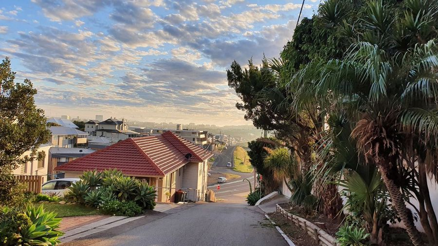 Road by palm trees and houses against sky