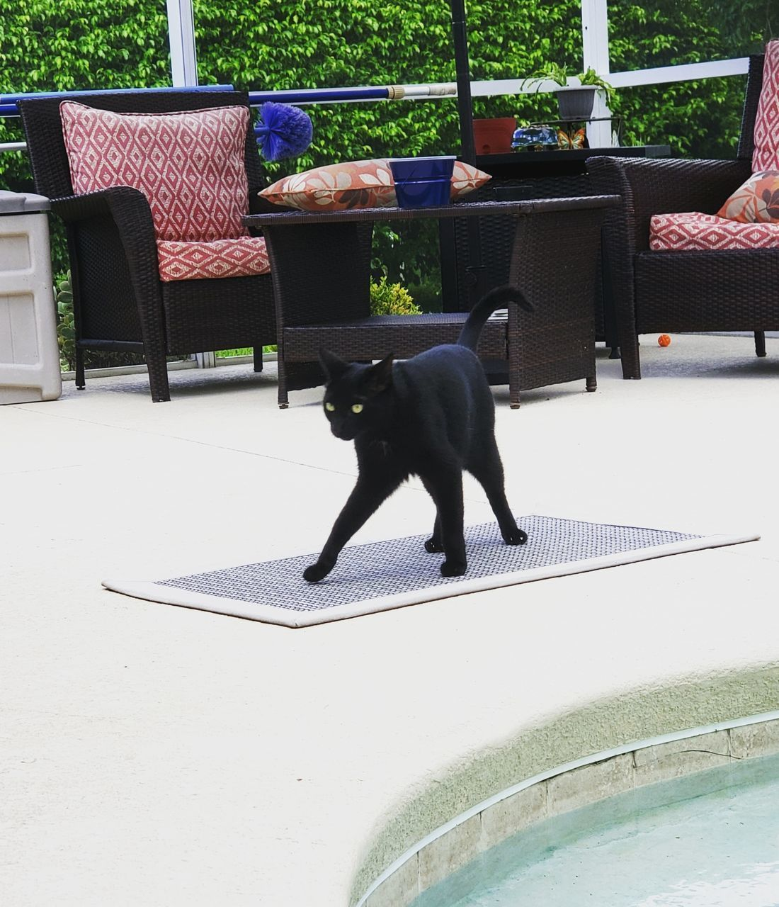 mammal, domestic animals, animal themes, animal, domestic, pets, one animal, vertebrate, seat, cat, black color, chair, no people, domestic cat, feline, day, front or back yard, relaxation, dog, canine, swimming pool